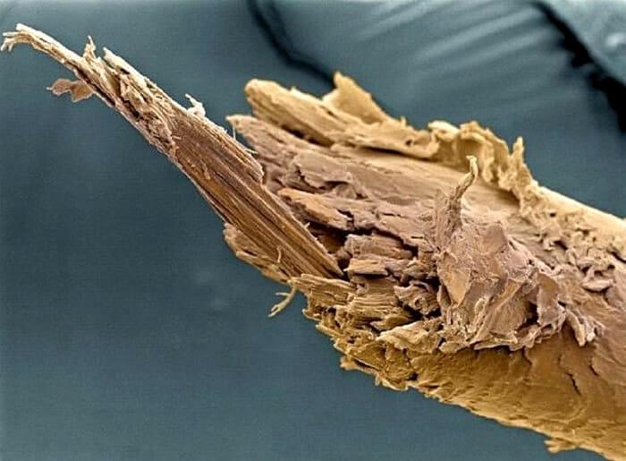 coisas-cotidiano-ampliadas-microscopio_11