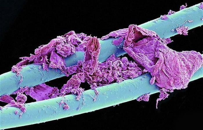 coisas-cotidiano-ampliadas-microscopio_5