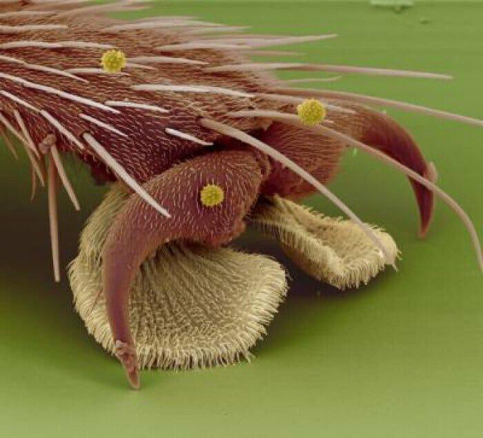 coisas-cotidiano-ampliadas-microscopio_9
