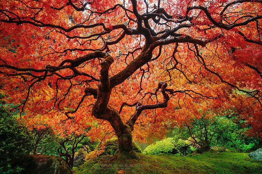 comparacoes-paisagens-outono_3b