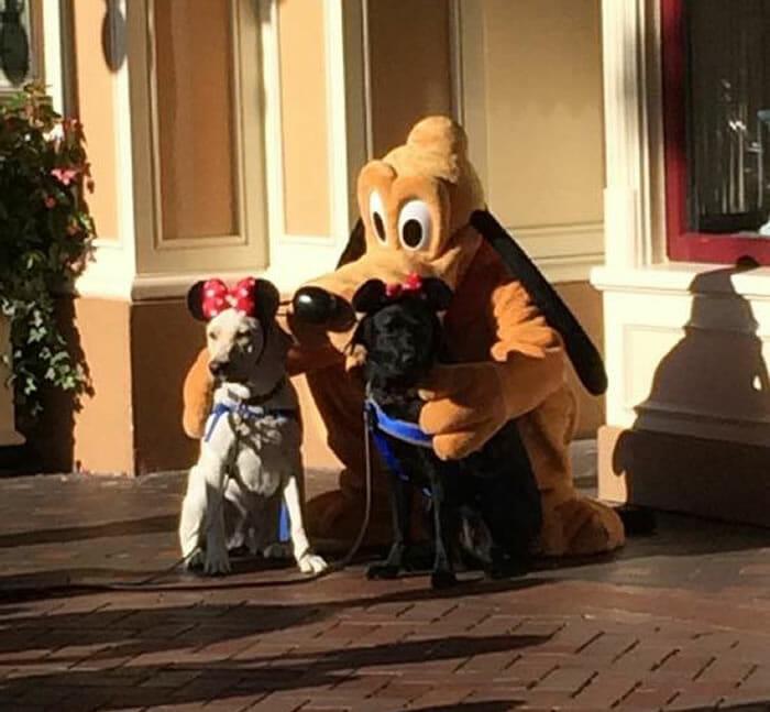 20 Momentos perfeitos capturados em parques da Disney