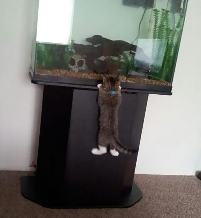 18 Flagrantes engraçados de gatos pegos roubando