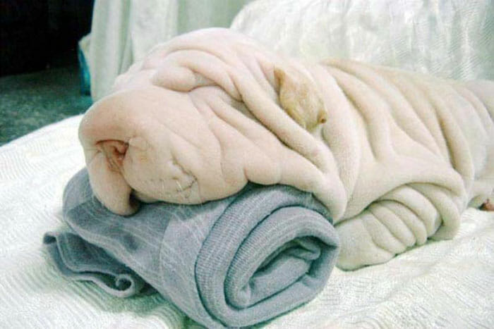 15 Animais que são mestres na arte de se camuflar