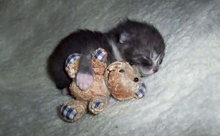 25 Animais adoráveis que amam ficar com seus bichos de pelúcia