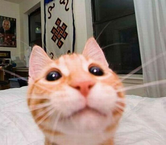 17 Animais que sabem fazer selfie melhor do que você