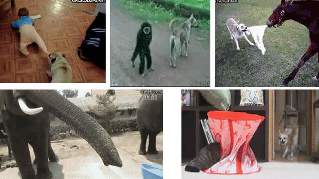 24 GIFs engraçados que provam que os animais são verdadeiros trapalhões - Parte II