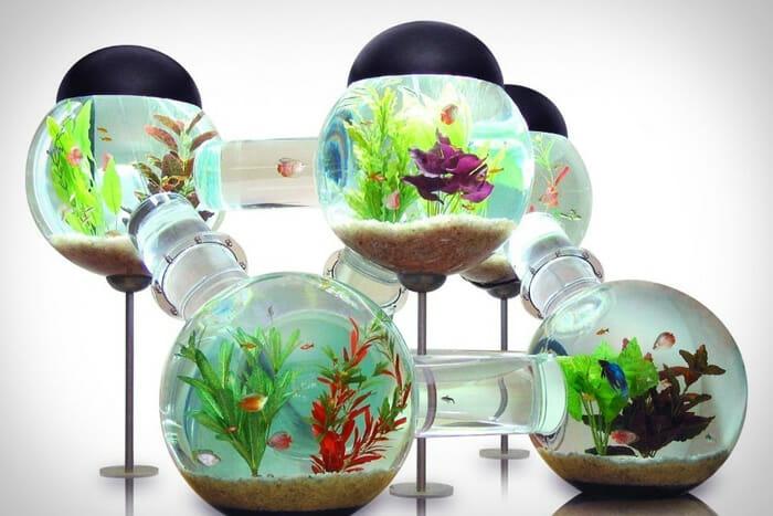 aquarios-fantasticos_20