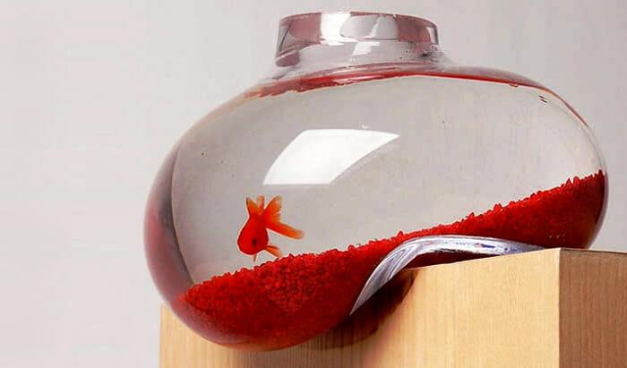 aquarios-fantasticos_3