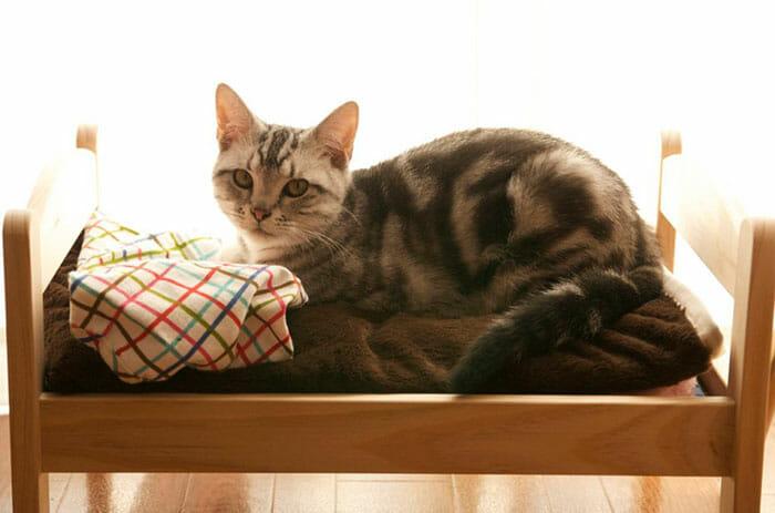 Japoneses fazem camas de gatos perfeitas com direito a treliche e tudo (15 Fotos)