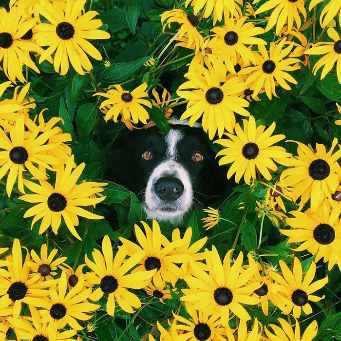 29 Imagens e um desafio: Encontre o cachorro! - Parte II