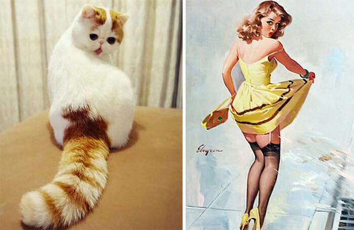 Gatos Que Se Parecem Com Pessoas 13
