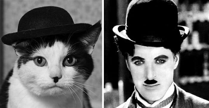 30 Gatos que se parecem com pessoas, personagens e outras coisas