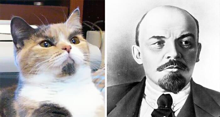 Gatos Que Se Parecem Com Pessoas 19