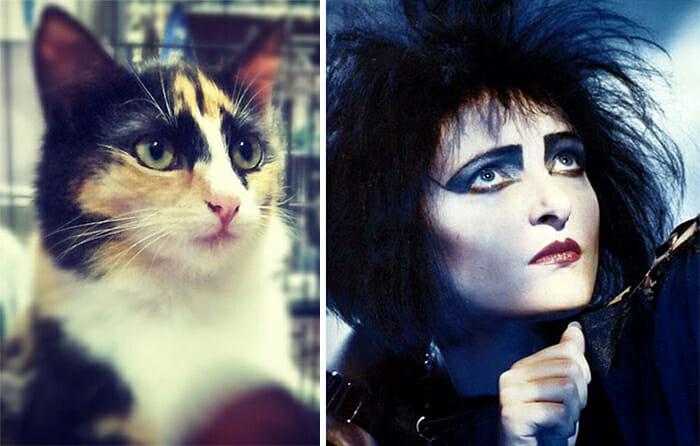 Gatos Que Se Parecem Com Pessoas 22