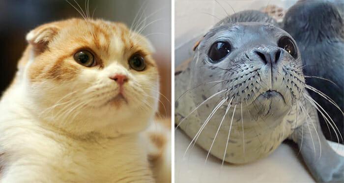 Gatos Que Se Parecem Com Pessoas 24