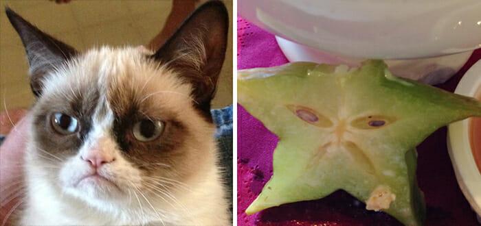 Gatos Que Se Parecem Com Pessoas 27