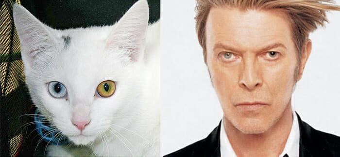 Gatos Que Se Parecem Com Pessoas 29