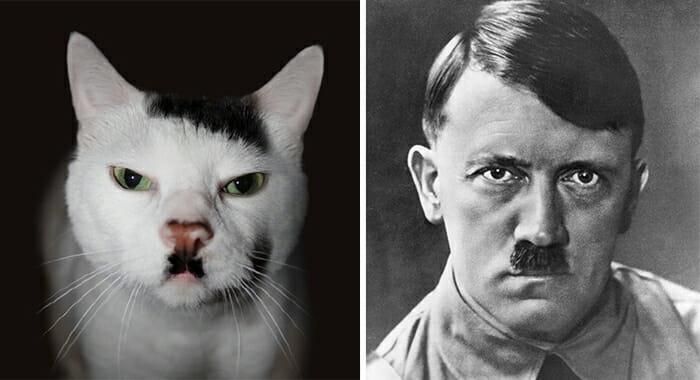 Gatos Que Se Parecem Com Pessoas 3