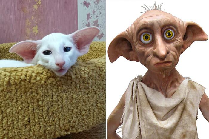 Gatos Que Se Parecem Com Pessoas 6