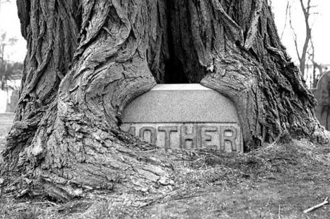 sepultura-estranha-interessante-assustadora_18