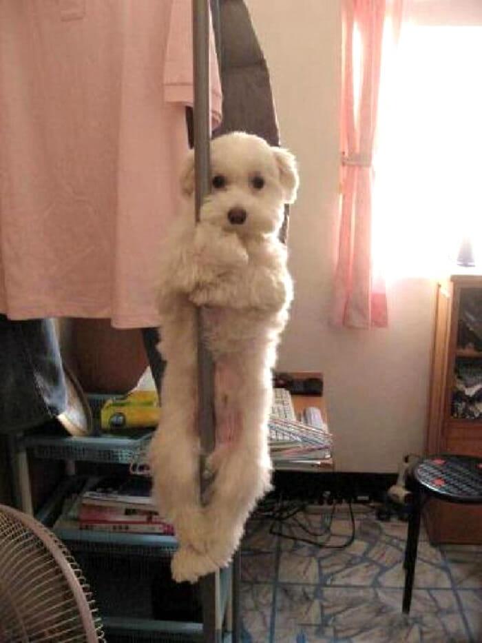 32 Animais culpados que juram que são inocentes