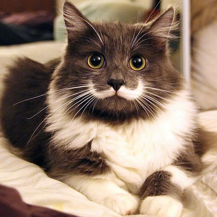 20 gatos fofos que ficaram famosos na inter  rock n tech