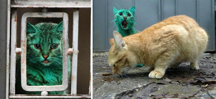 A curiosa história do gato verde (vídeo)