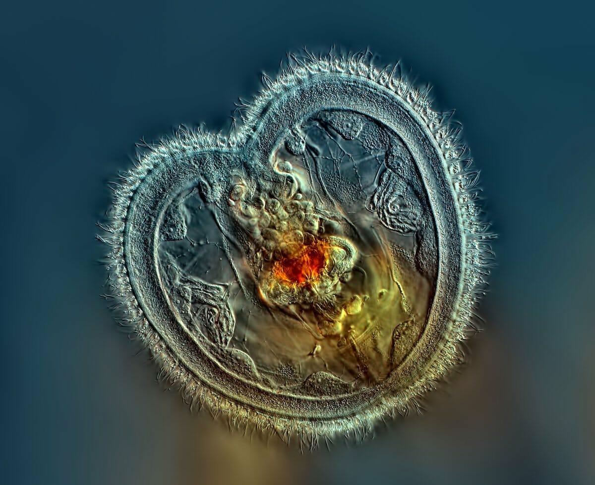 imagens-espetaculares-2014-ciencia_21