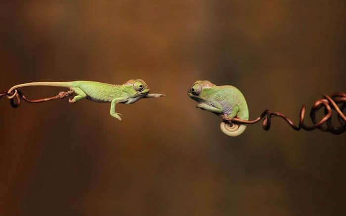 16 Imagens provam que répteis também são super fofos