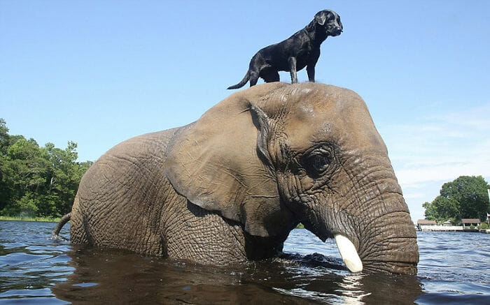 20 Amizades incomuns entre animais que são absolutamente adoráveis