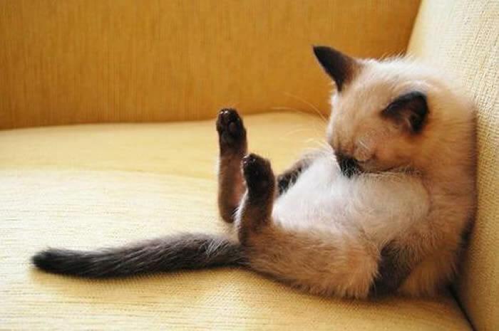 25 Animais que realmente estavam precisando de uma soneca