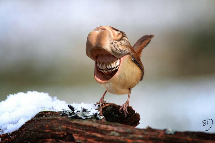 big-mouth-birds_1