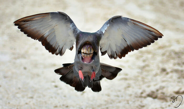 big-mouth-birds_10