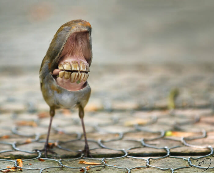 big-mouth-birds_11