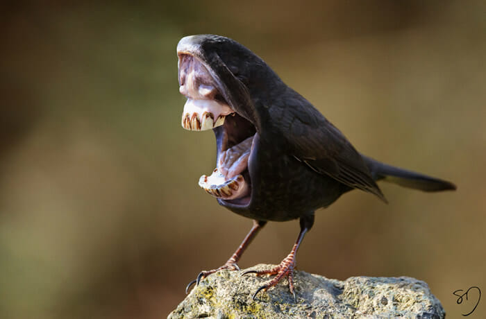 big-mouth-birds_2