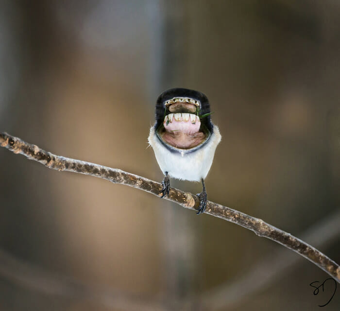 big-mouth-birds_4