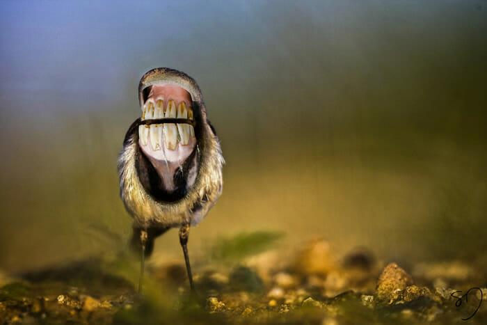 big-mouth-birds_5