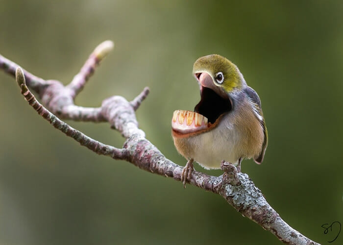big-mouth-birds_6