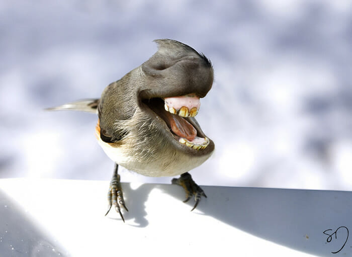 big-mouth-birds_7