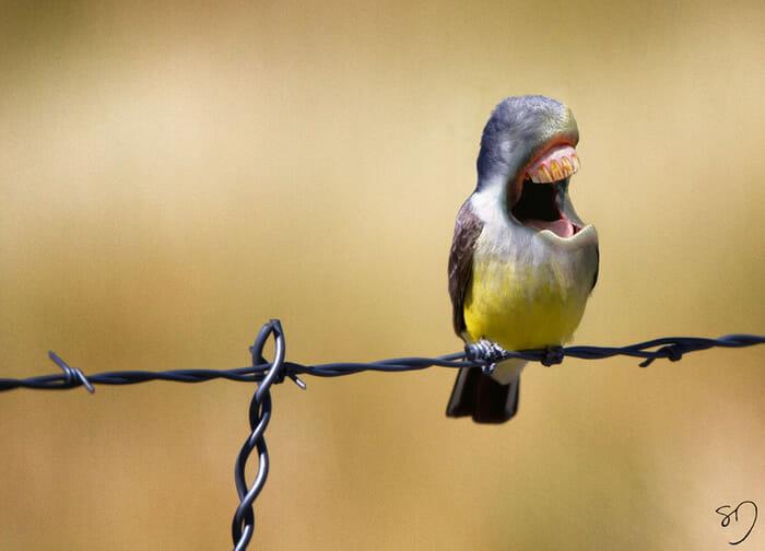 big-mouth-birds_8