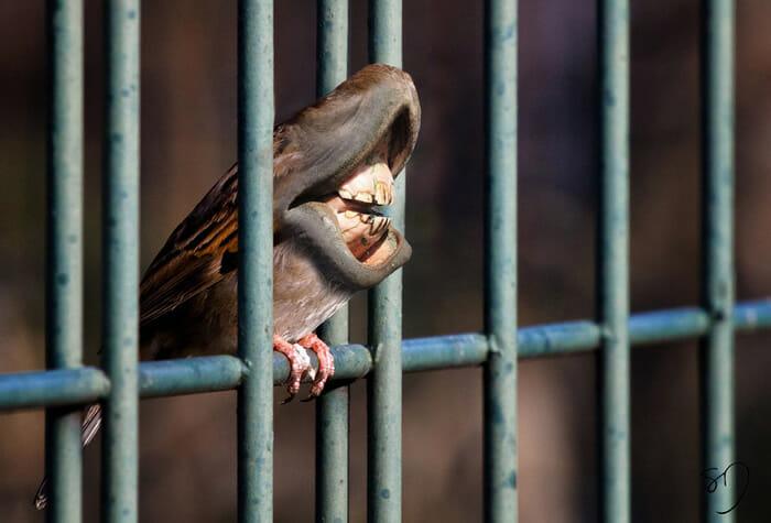 big-mouth-birds_9