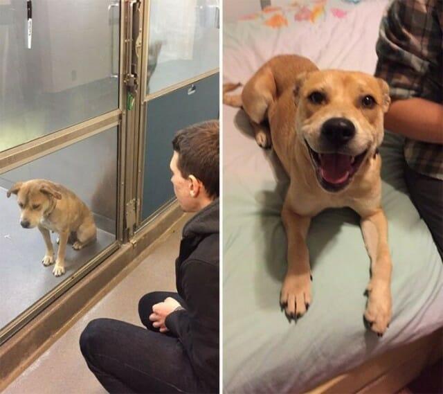 Adote um Amigo! 16 Fotos Superlegais de Animais Antes e Depois de Serem Adotados