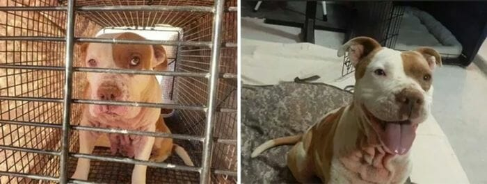 animais-antes-depois-adocao_4
