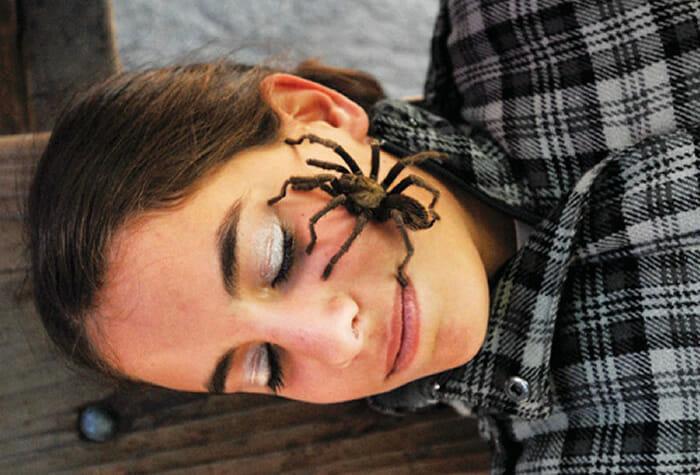 animais-insetos-fariam-vc-gritar_5