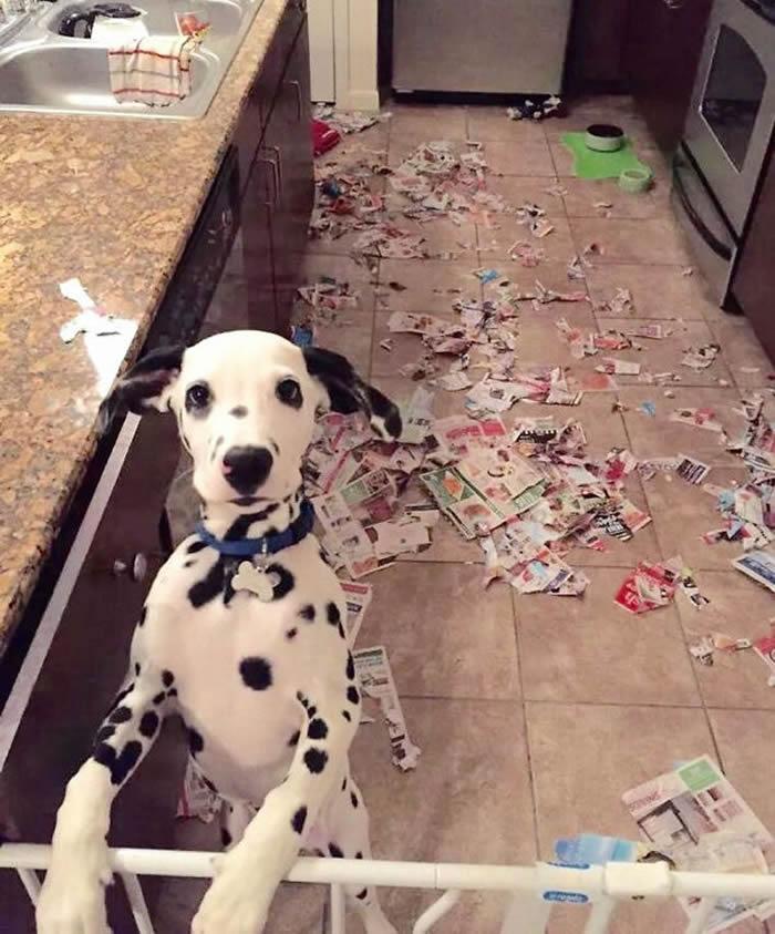 20 Fotos Engraçadas de Cães Que Realmente Sabem Sacanear
