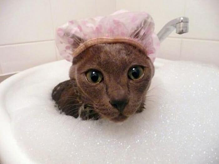 30 Gatos que definitivamente são loucos por água