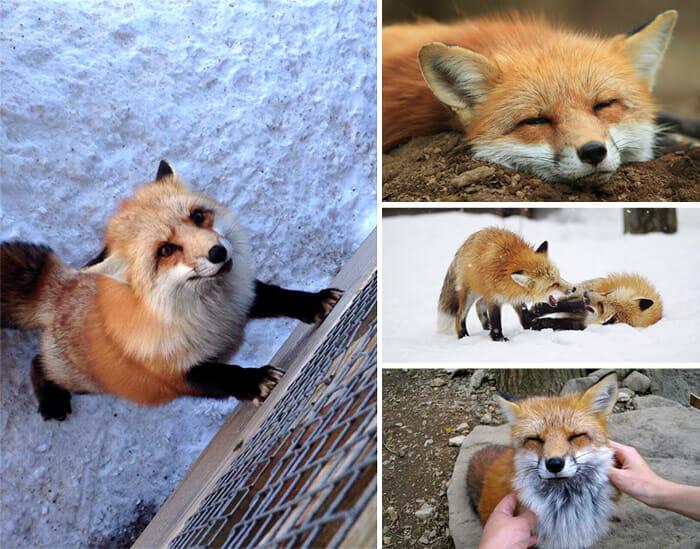 vila-das-raposas-japao