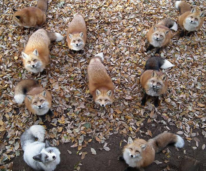 vila-das-raposas-japao_1