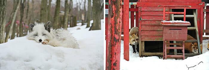 vila-das-raposas-japao_10