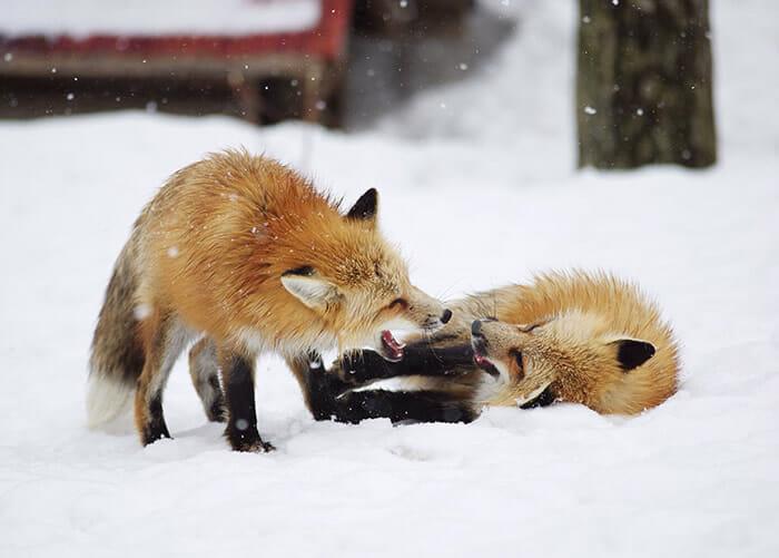 vila-das-raposas-japao_11